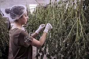 """Award-Winning Film Producer Creating New Documentary Chronicling The Rich History of Hemp Production in America """"The Seed and Fiber of Wealth"""""""