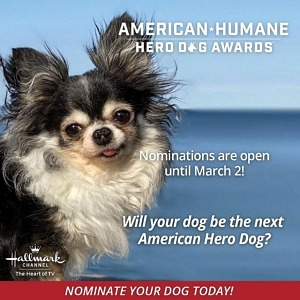Is Your Dog a Hero to You? Nominations Open for the 2021 American Humane Hero Dog Awards